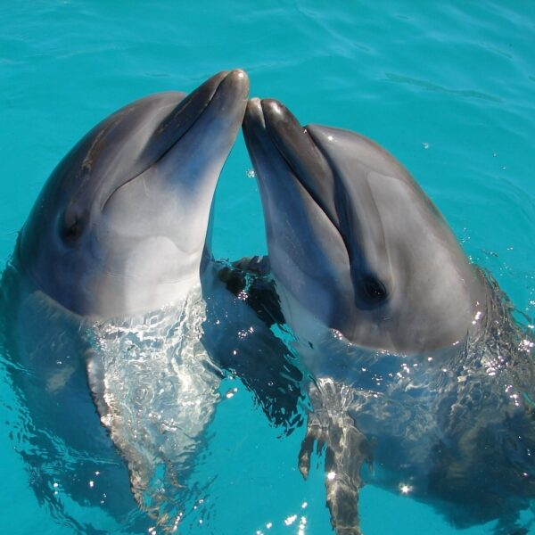 dolphins hilton head